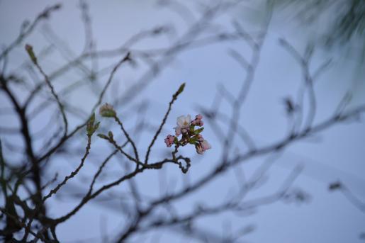 2013/04/17 21:48/烏帽子山にも花一輪