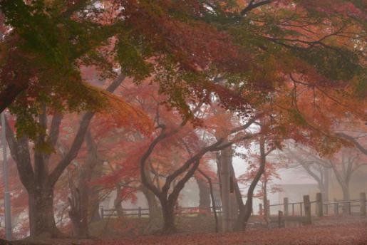 2014/11/06 10:03/烏帽子山公園 11月6日