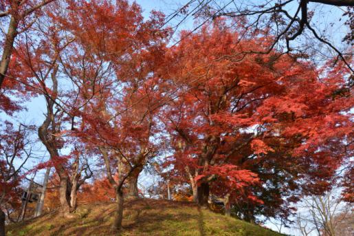2014/11/12 17:08/南陽市 熊野大社、薬師寺、烏帽子山
