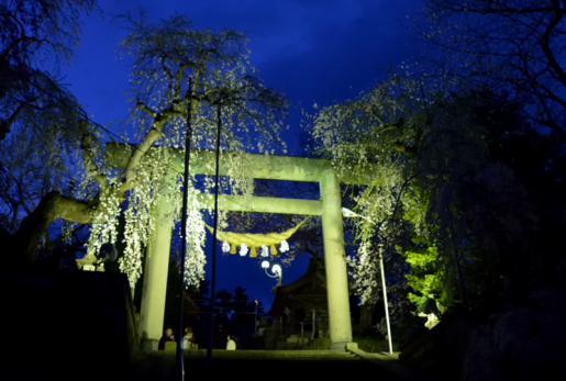 2015/04/24 09:44/22日 烏帽子山千本桜 夜桜