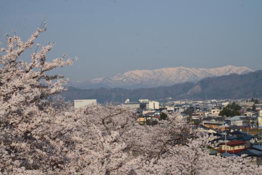 2016/04/17 10:07/烏帽子山は満開花盛り