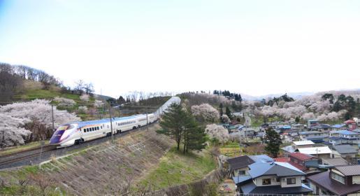 2016/04/17 15:36/お花見の楽しみ方