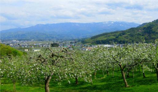 2011/11/22 09:43/リンゴ畑と吾妻山