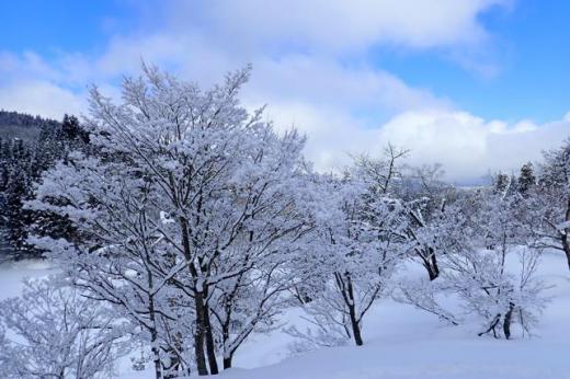 天空に雪の華/