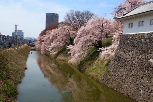 山形市 霞城の桜満開/