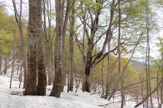 巨木周辺/