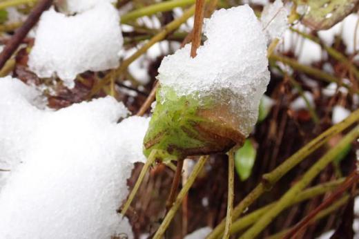 雪に覆われて/