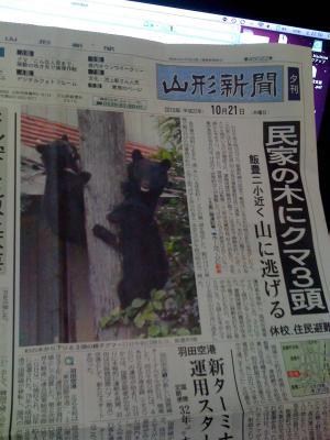 「やましん夕刊さ・・くまさん3びぎ」の画像