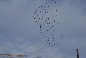 「9/16日(火)昨日は、予定通り「長岡80K」の連合会訓練に参加しました。」の画像