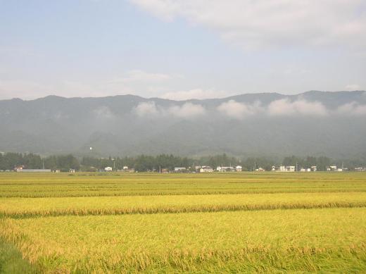 男心と秋の空(再掲)/