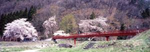 「春のお花見いも煮会」の画像