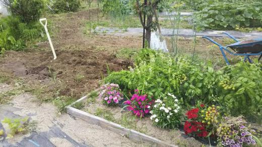 庭の花壇/