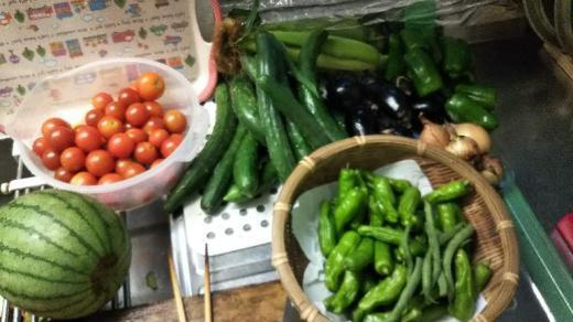 今朝の菜園野菜/