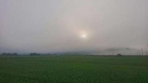 早朝の散歩で目にとまった朝霧の中の田園風景です 今日は夏の陽ざしで暑くなりそうです/