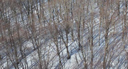 朝から雨です 一昨日撮った落葉樹の樹林もどこか春を感じさせる風景のようです 今日の暖かさと雨で雪も一気にとけるのでしょうか 県内のあちこちでマンサクの花や梅の開花が報じられています 置賜の花だよりも早く伝えたいものです 花が咲いていたら教えて下さ〜い/