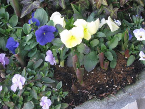 「東北にも春の訪れです!」の画像