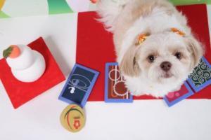 「看板犬「スピア」より 新年のご挨拶」の画像