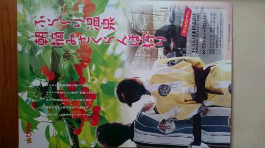 2017/06/06 10:41/期間限定  さくらんぼ朝摘み!