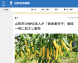 〈Thanks〉山形経済新聞様|黄金唐辛子:2018/12/04 12:36