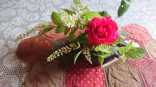 ★。★今日のお花は・・・美蔵/