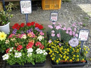 「花や野菜の苗も販売しています。」の画像