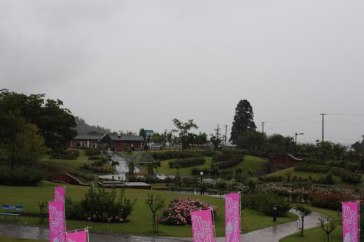 秋のバラまつり2011/