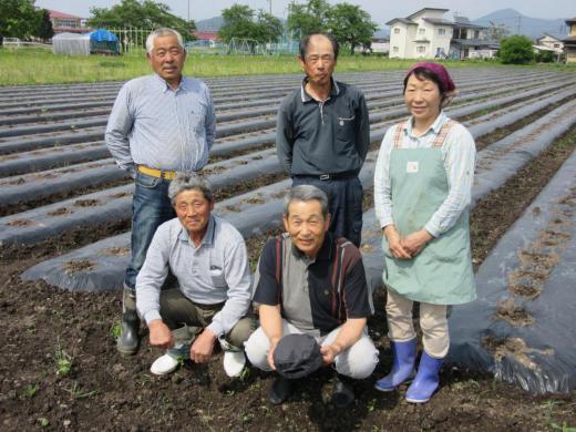 村山の里芋収穫できます。/