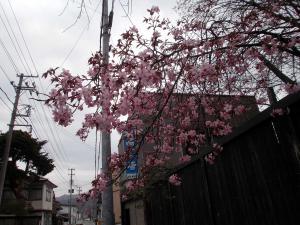 「桜の季節」の画像