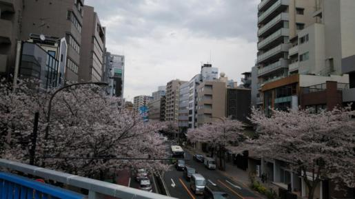 2019/04/03 16:03/☆東京は、もはや春だぁ〜(^∇^)☆