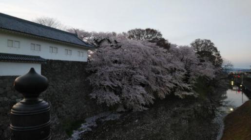 2019/04/24 22:10/☆夜桜は、綺麗です☆(^.^)