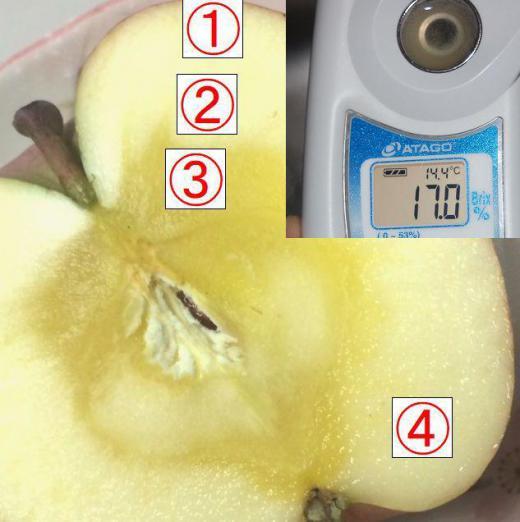 山の学校がお答えする…リンゴのハテナ?�/