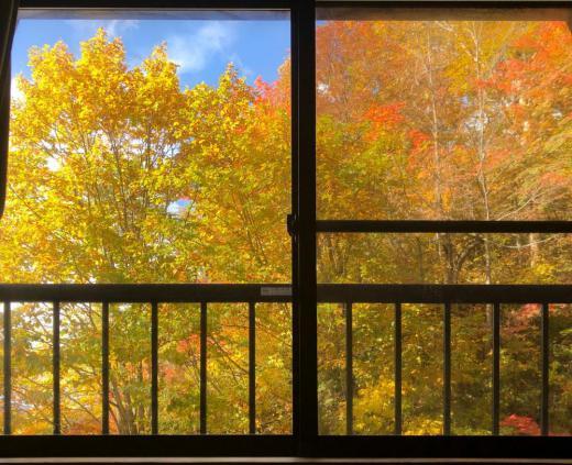 紅葉ってドコからがキレイ? 「まぁ 昼寝してる窓から かな」 って言う(^_-)-☆/