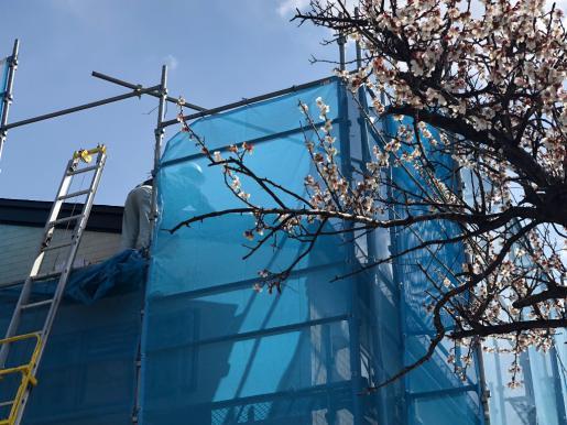 2018/04/12 18:49/桜の木の上で・・・