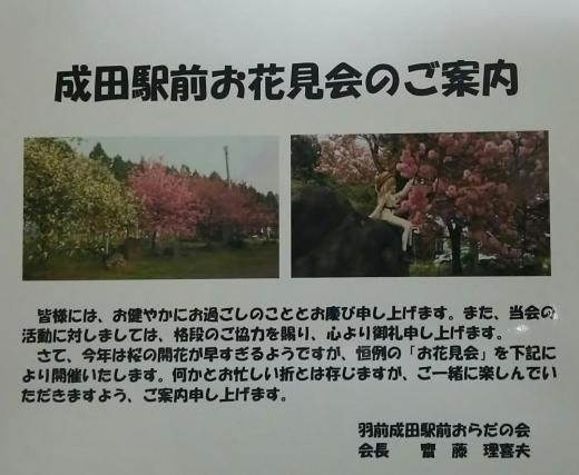 21日はお花見会/