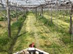 「草刈り日和」の画像