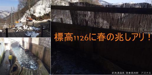 2015/03/29 12:03/奥白布にも春だより・・・ もうすぐ(・ω<)