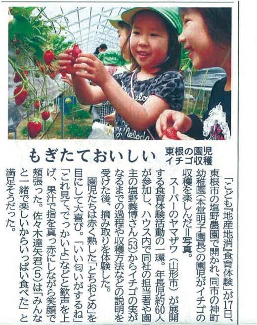 もぎたておいしい、東根の園児イチゴ収穫!/