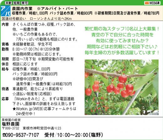 【アルバイト募集】さくらんぼ&いちご農作業/