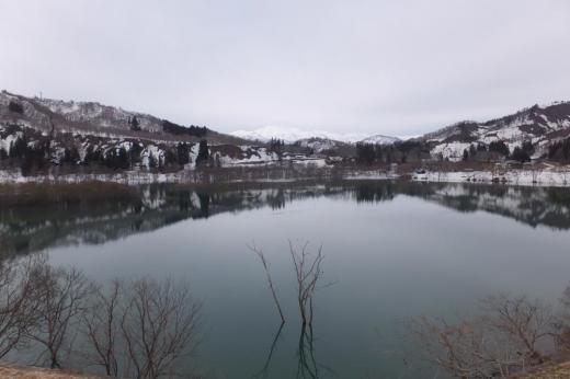 水没林  白川湖でそろそろ始まり始まりィー。/
