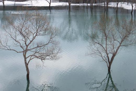 水没林  白川湖の今 こんな感じです。/