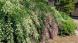 '21 はぎ公園の開花状況(9月10日):2021/09/10 14:14