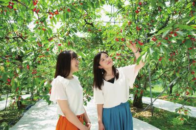 「天童市観光物産協会推奨果樹園」の画像