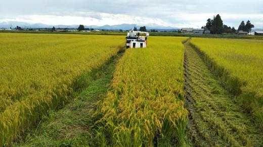 稲刈り始まりました/