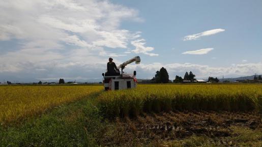 2020/09/21 13:22/稲刈りはじめました