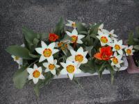 「花開く、春」の画像