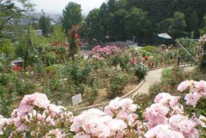 「南陽市の双松公園のバラ」の画像