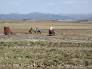 「畑耕す」の画像