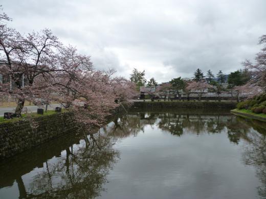 神社周辺の桜の様子/