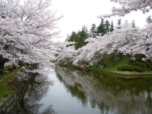 2012年松が岬公園(上杉神社)桜情報4月30日(月)/