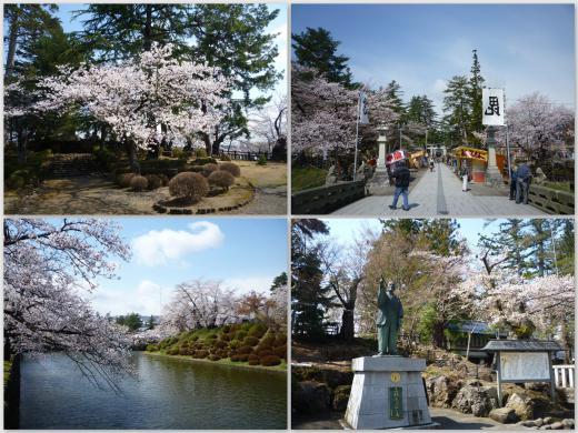 2013年松が岬公園(上杉神社)桜情報4月27日(土)8分咲き/